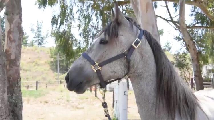 Cavalo é membro da força espacial