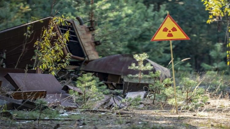 fungos de chernobyl