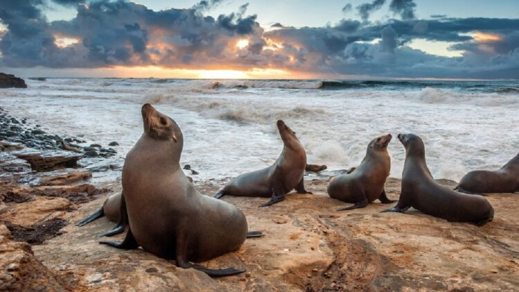 leões-marinhos decapitados