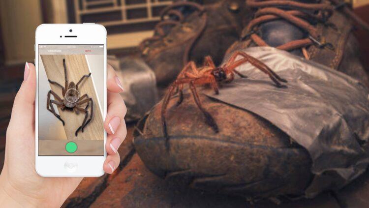 Este aplicativo informa rapidamente se uma aranha ou cobra é venenosa