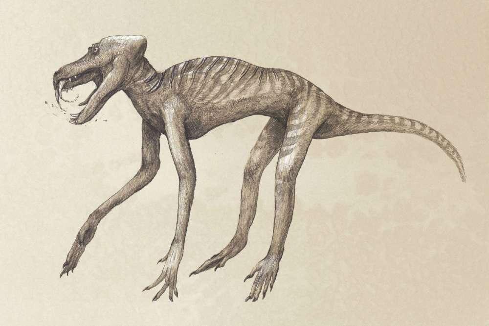 Ilustração de um babuíno em esqueleto.