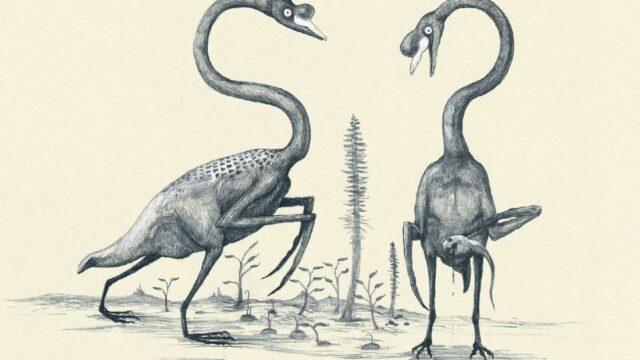 Assim seriam os animais com base apenas em sua estrutura óssea. Cisne baseado apenas em seu esqueleto.
