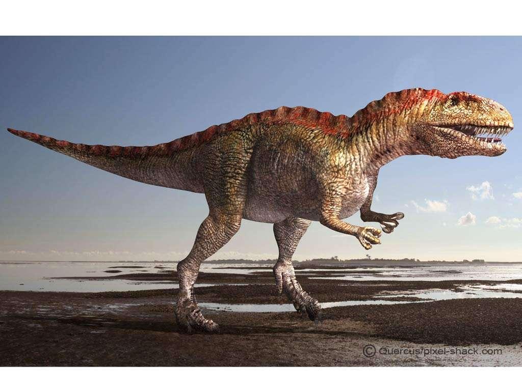 Futura Sciences, https://www.futura-sciences.com/planete/photos/paleontologie-top-10-dinosaures-vous-ne-voudriez-jamais-croiser-677/dinosaure-acrocanthosaure-acrocanthosaurus-plus-grands-theropodes-4481/