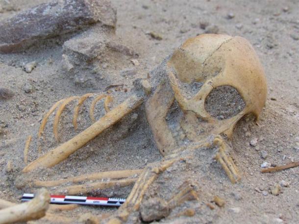 Esqueleto de macaco