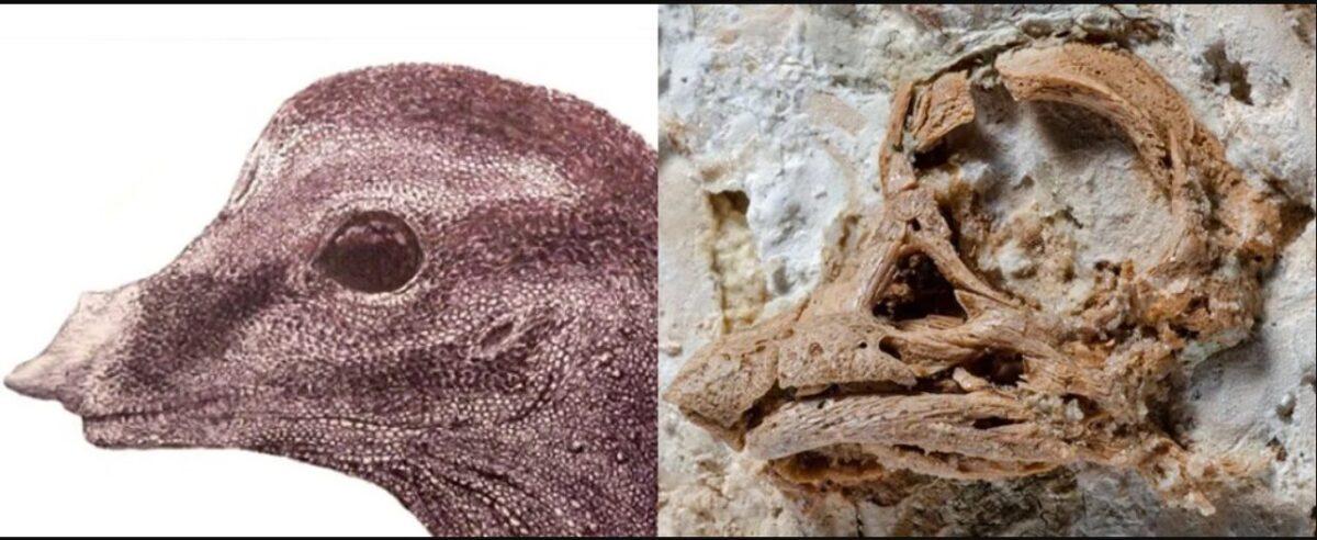 fóssil de dinossauro encontrado