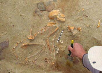 Macacos de estimação no Egito Antigo