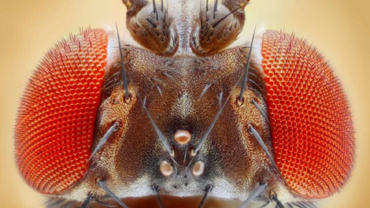 moscas-sao-enganadas-por-ilusoes-opticas