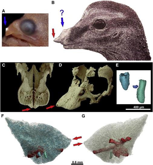 Reconstrução da anatomia crâniofacial do dinossauro