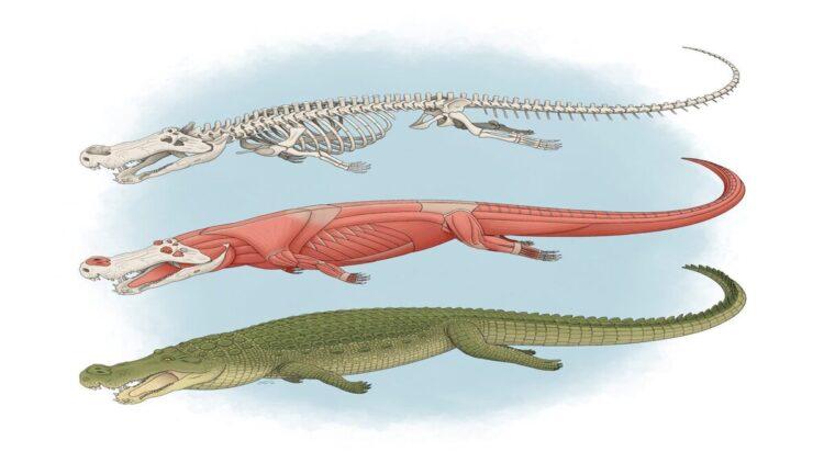 reconstrução de Deinosuchus riograndensis o crocodilo pré-histórico gigante
