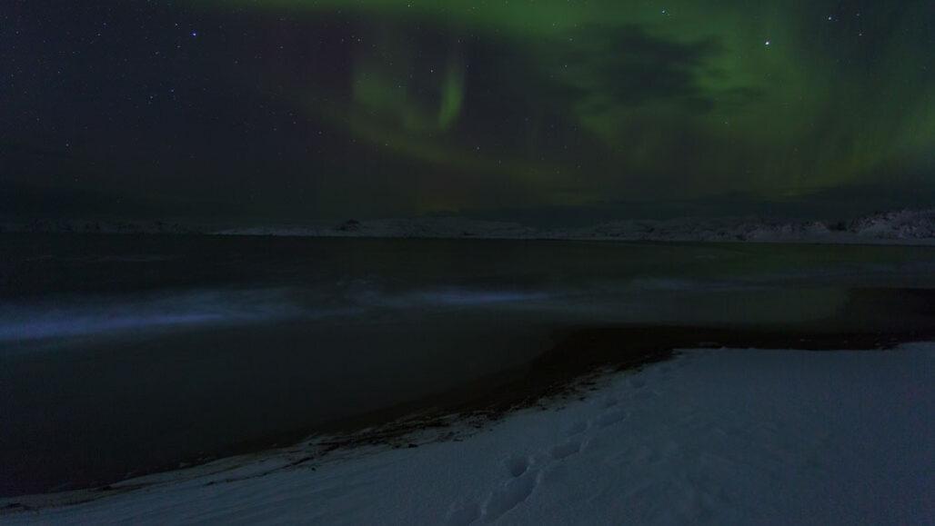 Fitoplâncton baía de Baffin