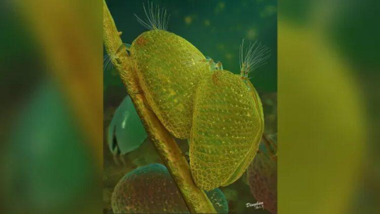 espermatozoide de 100 milhões de anos
