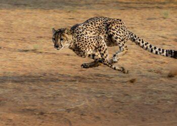 animais mais rápidos do mundo