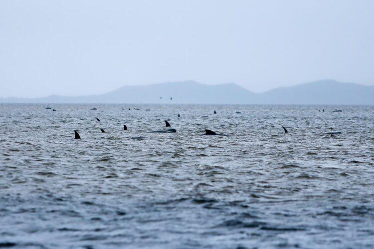 baleias encalhadas na praia