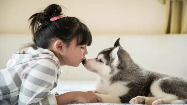 cães têm nariz gelado