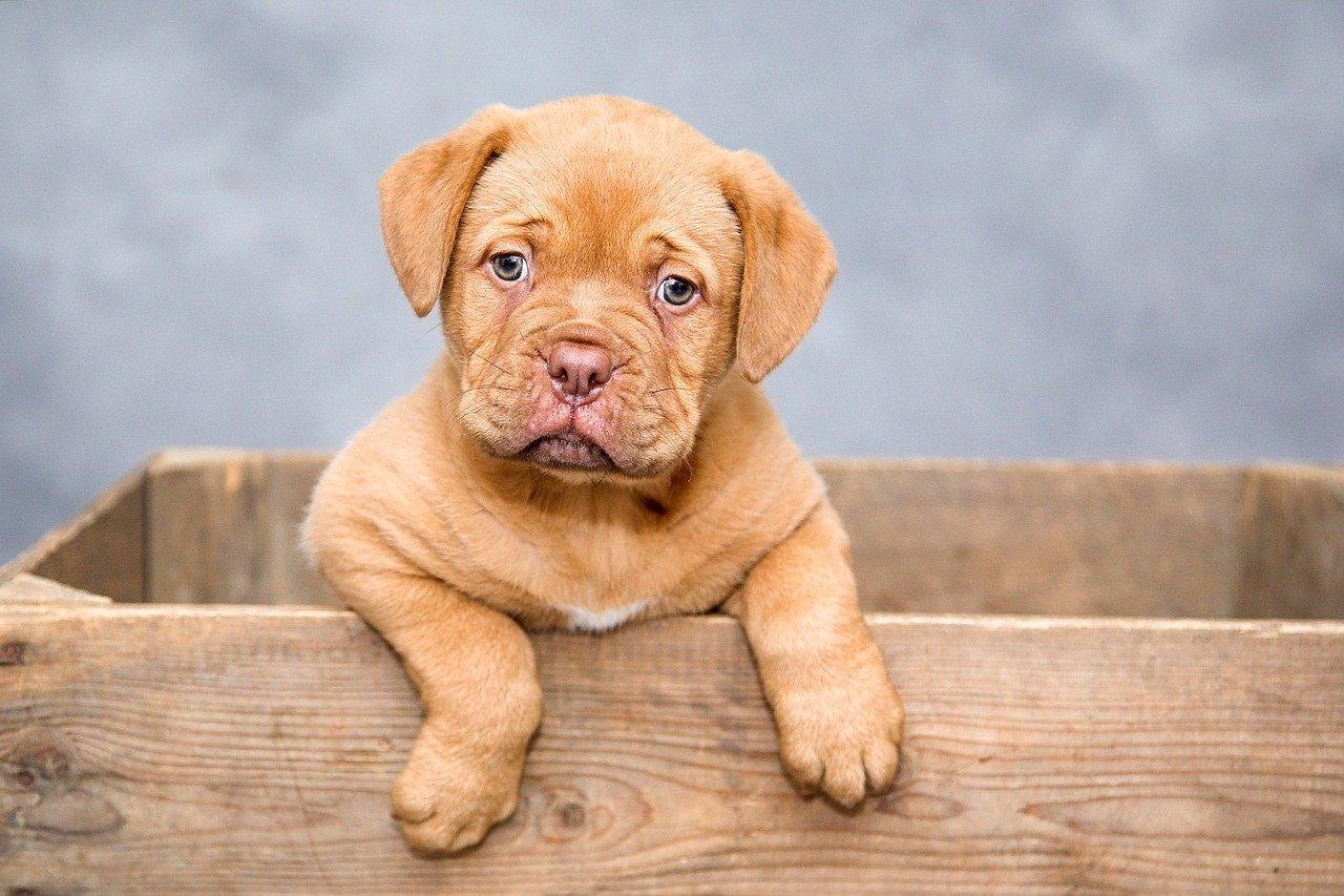 3 novas curiosidades sobre cachorros