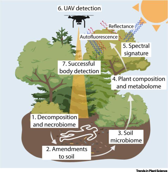 Esquema encontrar corpos com árvores