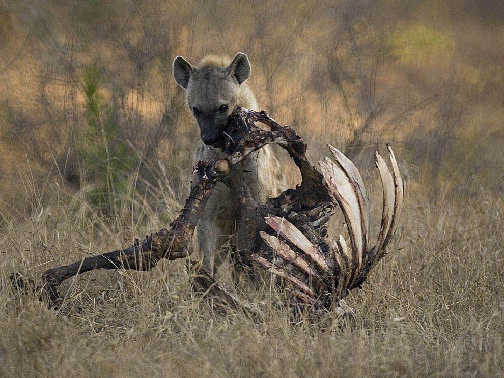 animais mais fortes do mundo