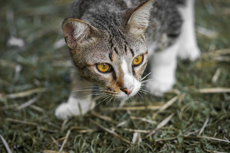 Existem 5 tipos de donos de gatos, segundo a ciência