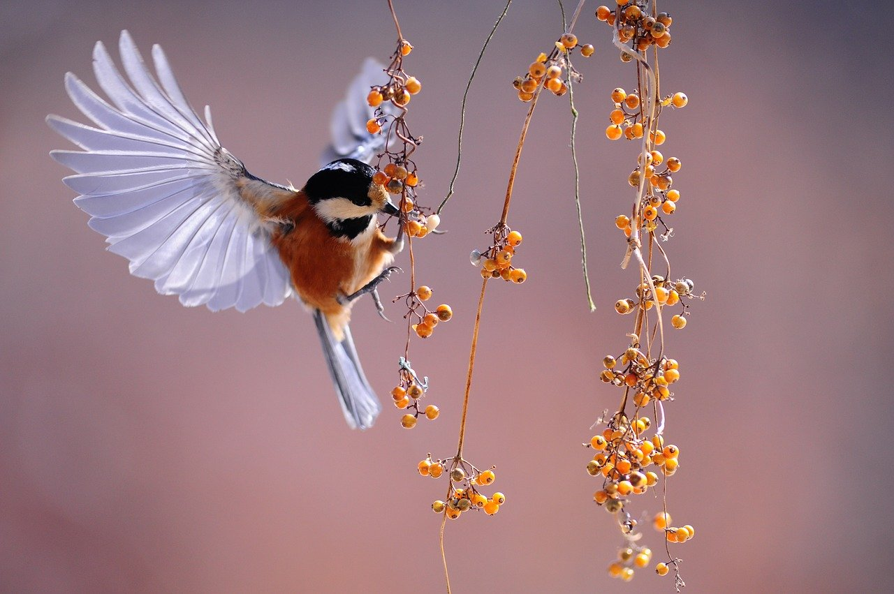 pássaro comendo