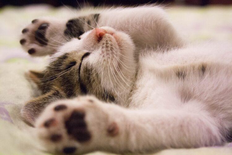 Porquê filhotes tem tanto sono