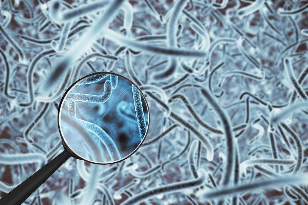 Um 'cérebro no intestino' regula a insulina e açúcar no sangue