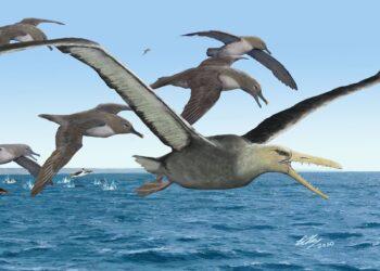 Um pássaro da família Pelagornithidae. (Créditos da imagem: Brian Choo)