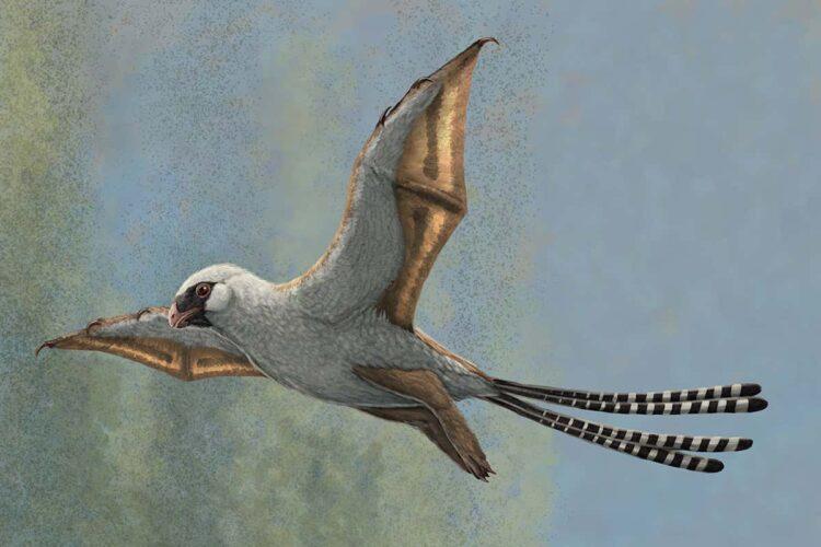 Impressão artística do Ambopteryx longibrachium. (Gabriel Ugueto)
