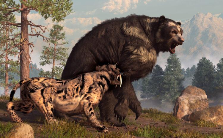 Ilustração de um urso de cara curta defendendo seu território de um dente-de-sabre durante a última era glacial. (Shutterstock)