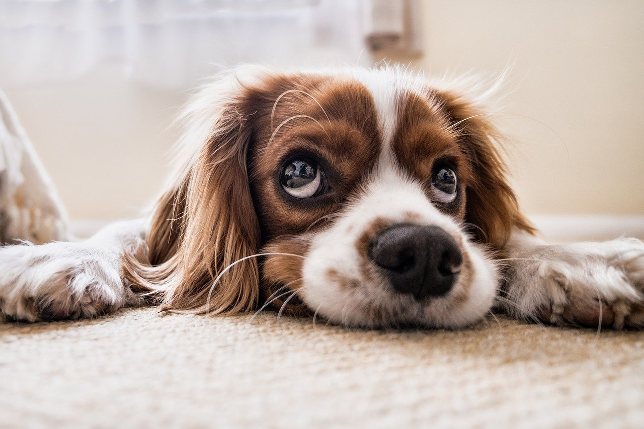 a relação entre rostos e cachorros