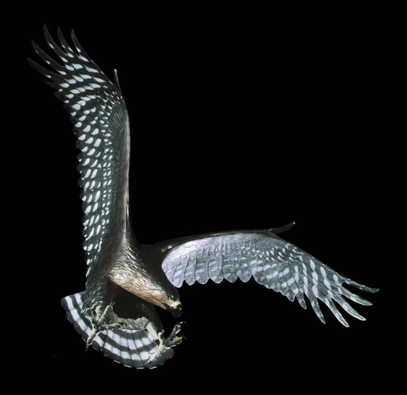 águia-de-haast