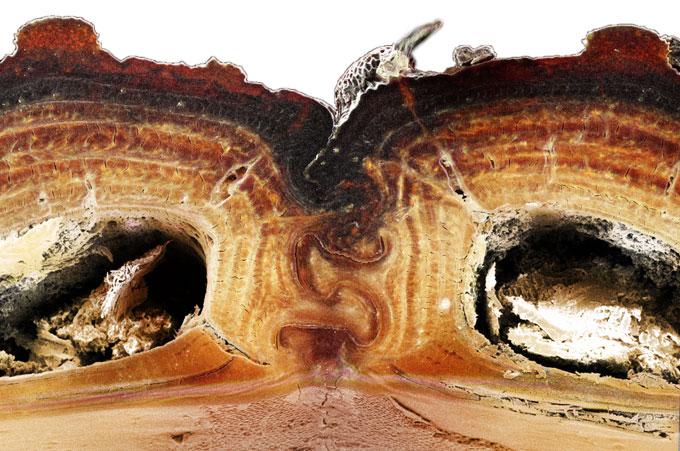 dentro do besouro
