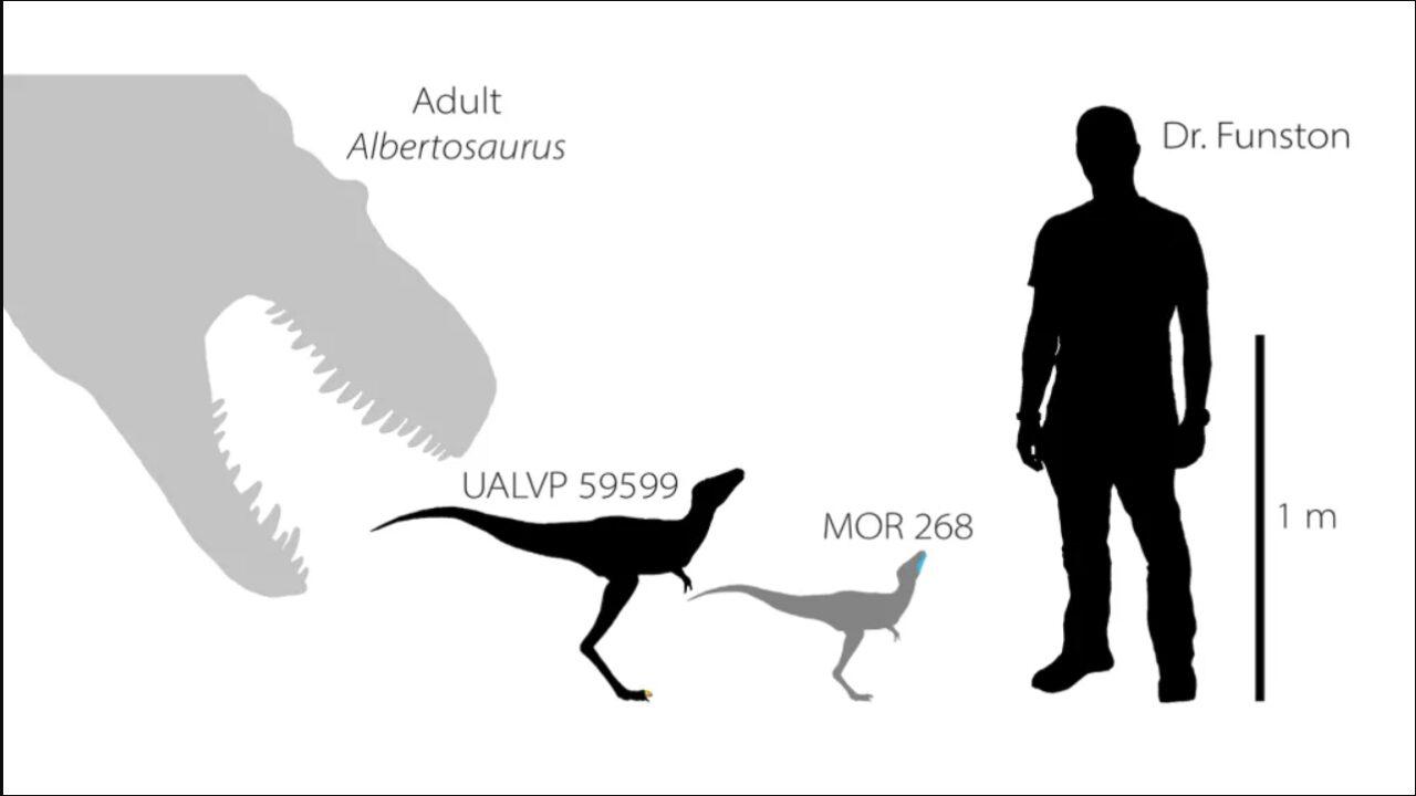 escala do tiranossauro