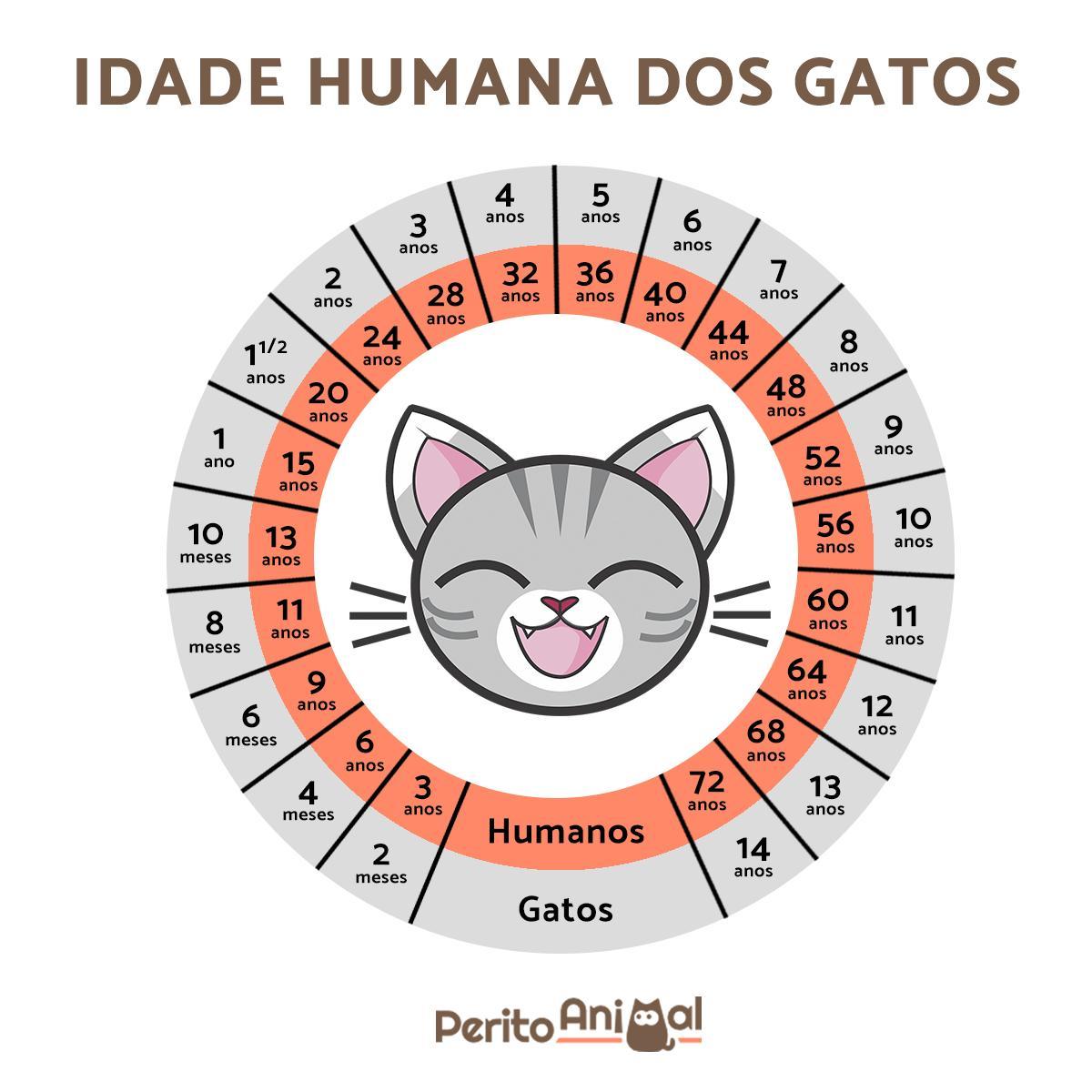 idade do gato em relação aos humanos