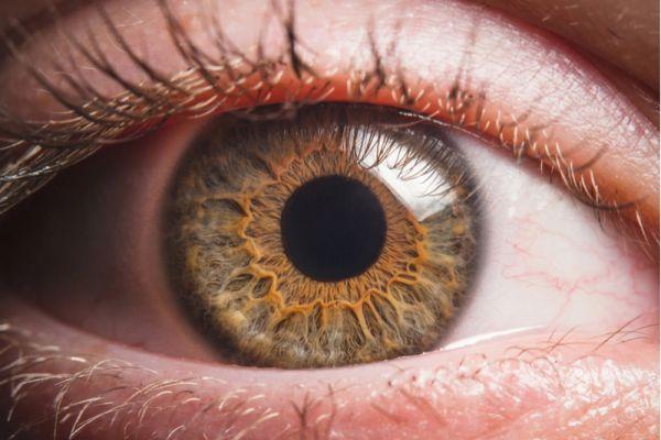 Olho Retina