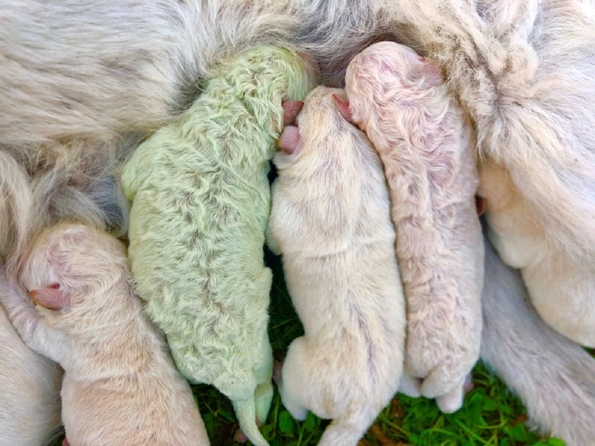 pelo de cachorro verde