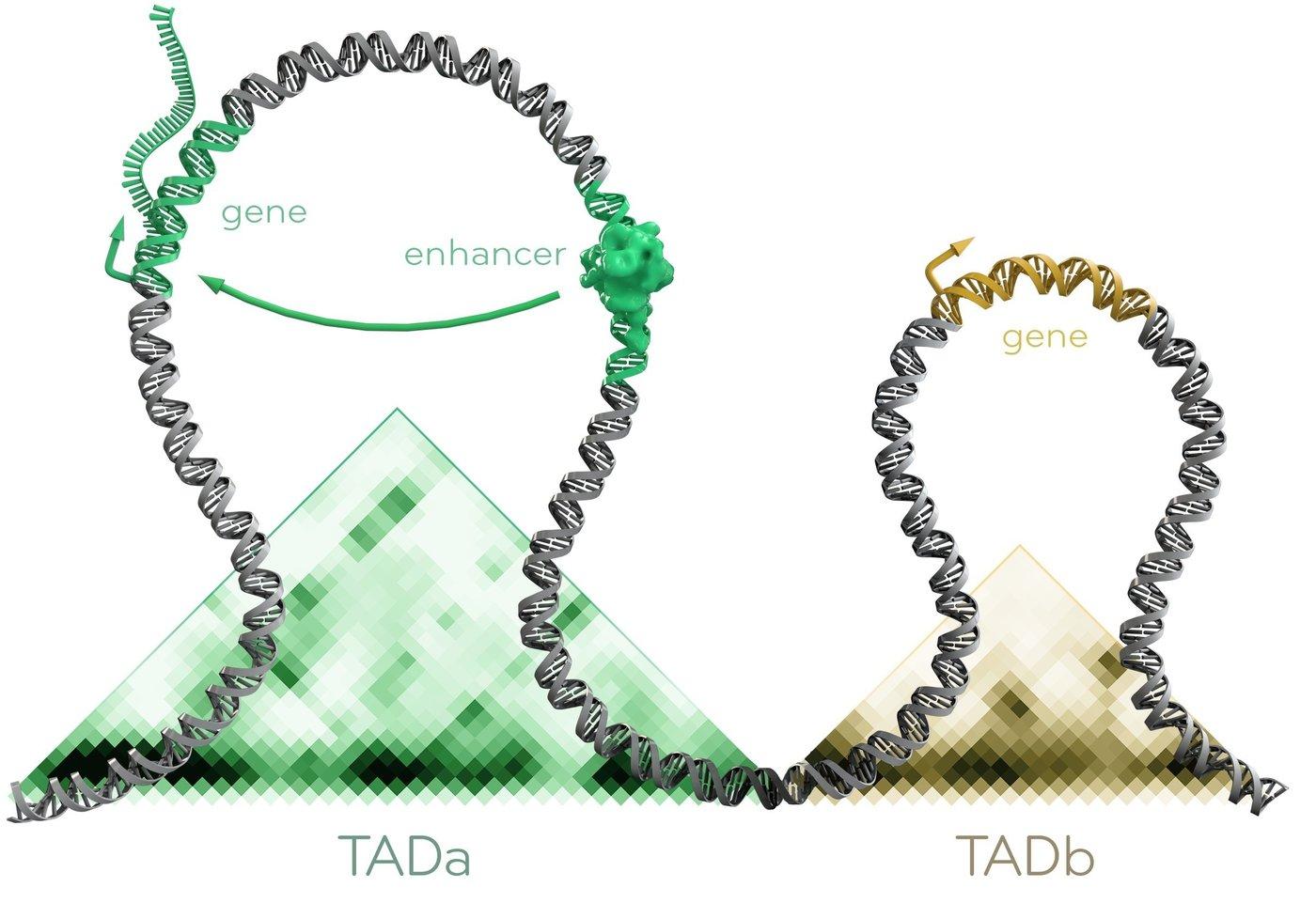 remodelação cromossômica