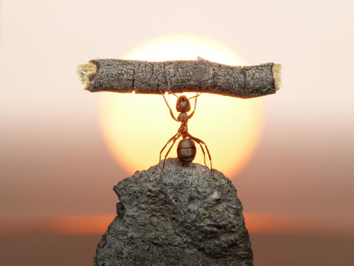Foi revelado o motivo das formigas serem tão fortes