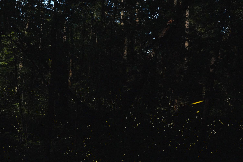 vaga-lume inseto brilhando