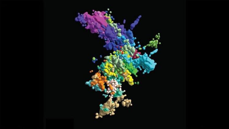 Cientistas acabam de descobrir o real formato dos cromossomos durante a maior parte do tempo. (Xiaowei Zhuang lab)