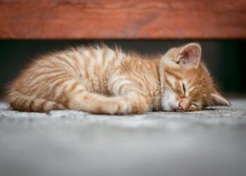 animais dorminhocos