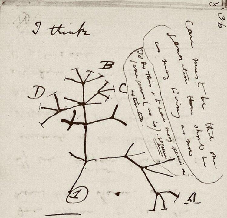 cadernos de anotações Darwin