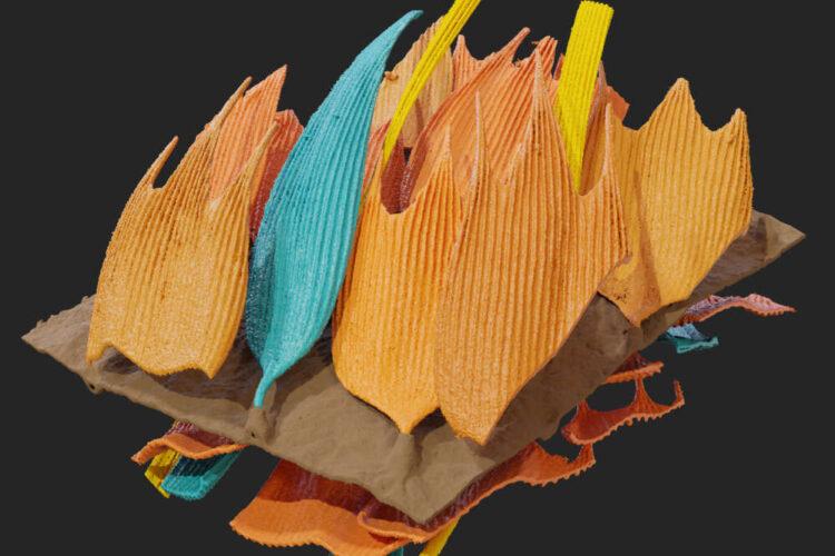 Modelagem gráfica de microestruturas tridimensionais das asas de mariposas à prova de som. (Imagem por: Simon Reichel, Thomas Neil, Zhiyuan Shen, and Marc Holderied)