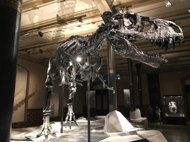 """Cientstas chineses encontraram evidências de uma extinção em massa """"perdida"""" que pode ter aberto caminho para os dinossauros. (heimseiten_WebdesignKoeln/Pixabay)"""