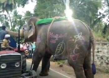 elefante na índia