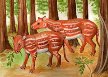Palentólogos descobriram diversos fósseis de ancestrais dos cavalos modernos que indicam que esse grupo pode ter se originado na Índia. (Cambaytherium thewissi. Créditos pela imagem: Elaine Kasmer)