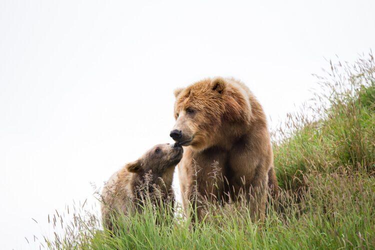 Uma ursa e seu filhote foram abatidos por autoridades russas após subirem em um submarino atracado. (Pixabay)