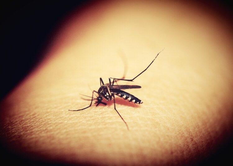Transmissão da malária