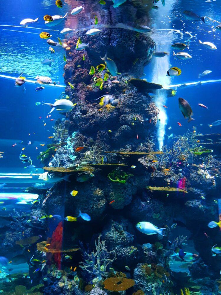 Casas de peixes