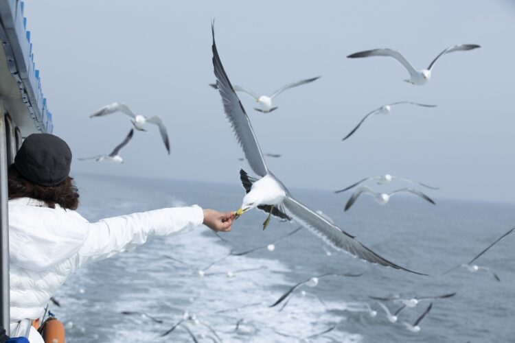 Estudos indicam que gaivotas sabem exatamente os melhores horários para roubar comida em escolas e procurar por restos em lixões. (Imagem de 종덕 지 por Pixabay)