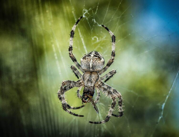 Cientistas da República Tcheca observaram que os machos de T. fabricii amarram as parceiras antes da reprodução.(Imagem de Peter H por Pixabay)